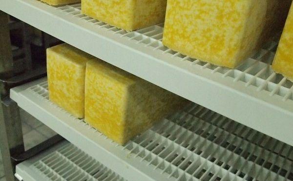 Tgr96 con formaggio russo in stagionatura
