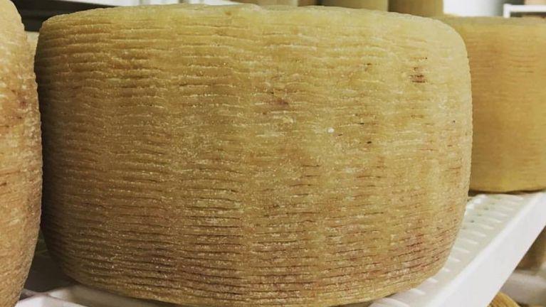 articoli in polipropilene per celle di stagionatura formaggi